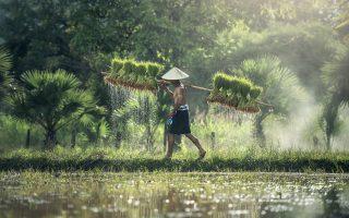 kambodża_widoki_wycieczki_do_kambodży